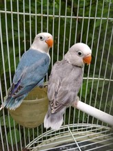 Two Birds On A Cage