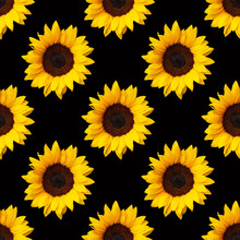 Sunflowers Flowers Seamless Pattern Design On Black Background. Can Be Tiled