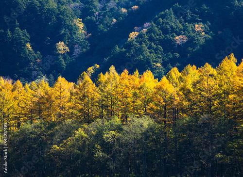 カラマツが紅葉した上高地の空きの風景 Canvas Print