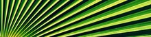 Close Up Of Fan Palm Leaf In D...