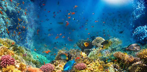 Underwater world. Coral fishes of Red sea. Egypt
