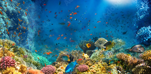 Fotografie, Tablou Underwater world. Coral fishes of Red sea. Egypt