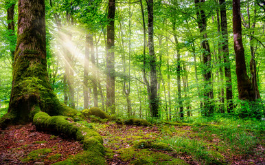 Sunlight in a green forest