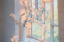 Cherry Flowers In White Jug On Windowsill At Sunset