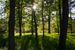 drzewa w parku pod słońce
