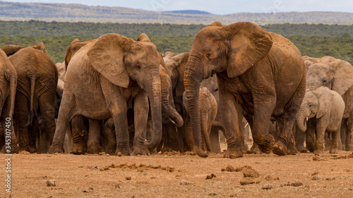 Elephants gathering in South Africa.