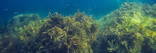 Underwater Landscape Reef With...