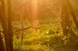 łąka, drzewa, kwiaty, przyroda, owady, słońce, dzień, poranek,