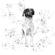 Aquarelle Painting Of Dog Sket...