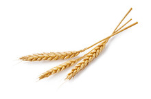 Three Wheat Spikelets Isolated...