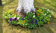 A Flower Bed With Multi-colore...