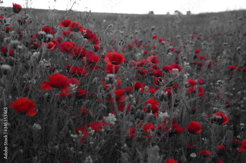 Fototapeta kwiaty mono czerwień natura abstrakcja  obraz na płótnie