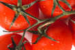 ripe, red tomatoes on a branch with dew drops close-up, on a white background