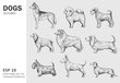 Set of popular breeds of dog. Hand drawn vector outlines. Black on transparent background