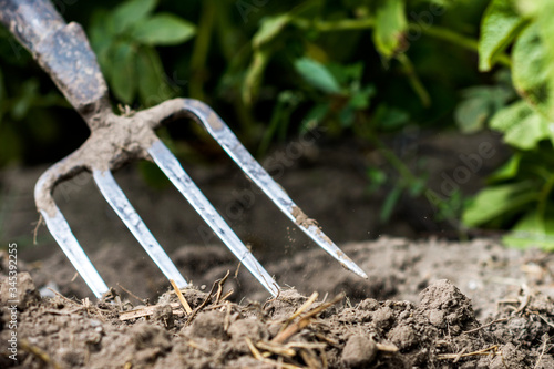 Obraz na plátne Pitchfork in the garden, in the soil in farmland, agriculture tool, work concept
