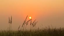 Hight Grass In A Sunrise Sun W...