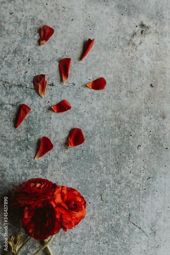 red flower grey background