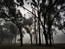 Picnic Table Under Trees On A Foggy Day
