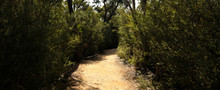 Panorama Of A Winding Dirt Gravel Path On A Hiking Trail Through Native Australian Bushland In The Grampians National Park, Rural Victoria