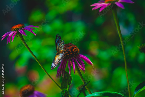 Widespread blue and black tones on a butterfly's wings while suckling on nectar of a wildflower.