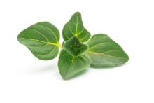 Raw Organic Oregano Leaf Or Ma...