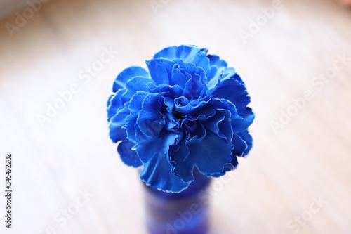 Fototapety, obrazy: 青いカーネーション