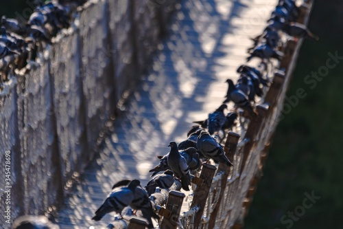 Beautiful shot of grey pigeons sitting on the edges of a rope bridge