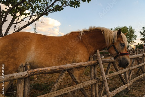 Beautiful shot of a brown horse standing nearby a wooden fence