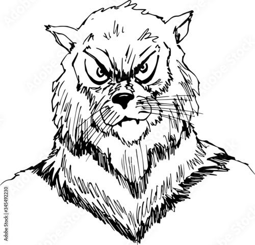 Vector of a wildcat man face design on white background, Vector illustration Tapéta, Fotótapéta