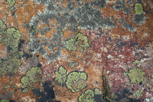 Rock Colored With Lichens And Minerals. Integral Natural Reserve Of Inagua. Gran Canaria. Canary Islands. Spain.