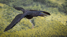 Archaeopteryx, Bird-like Dinosaur From The Late Jurassic Period Flying Over The Forest