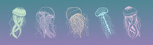 Set Of Jellyfish In Gentle Col...