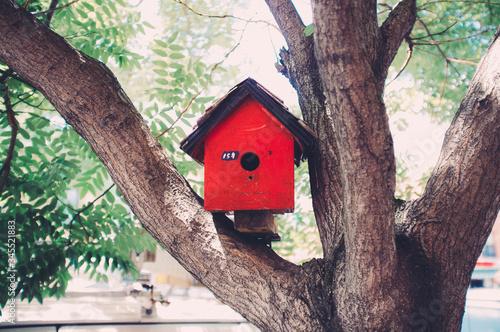 Fototapeta Red Birdhouse On Tree In Yard