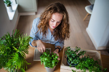 Top View Of Young Woman Indoors At Home, Cutting Herbs.