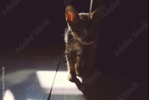 High Angle View Of Kitten At Home Fototapeta