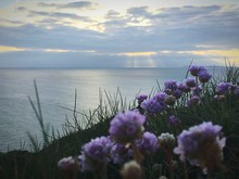 Close-up Of Purple Flowers Growing By Sea Against Sky