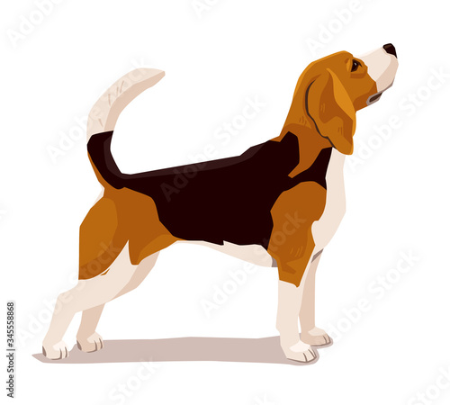 Cute beadle puppy Canvas Print