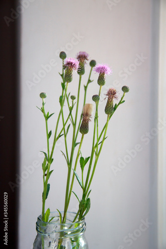 Flowers of Agrimony on a white background. Wallpaper Mural