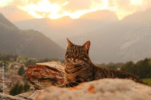 Portrait Of Cat Sitting Against Mountains During Sunset - fototapety na wymiar