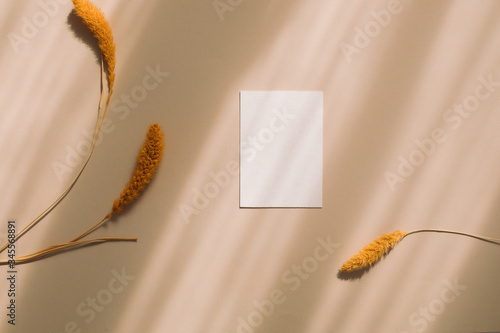 Obraz Top view of blank paper, card decorative fluffy plants on beige shadow background.  Flat lay, wedding invitation concept. - fototapety do salonu