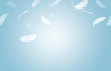 White Feathers Floating In The Air, Blue Background With Copy Space, Feathers Abstract Background