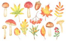 Fall Leaves And Mushrooms Illu...