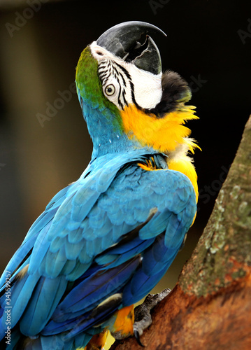 Photo Close-up Of Gold And Blue Macaw Perching On Tree