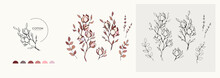 Cotton Plant Logo And Branch. Hand Drawn Wedding Herb, Plant And Monogram With Elegant Leaves For Invitation Save The Date Card Design. Botanical Rustic Trendy Greenery