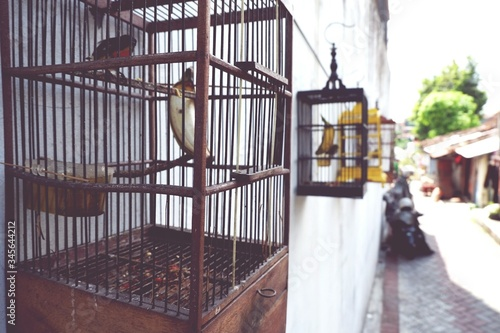 Fotografie, Tablou Close-up Of Birdcages Hanging From House Wall