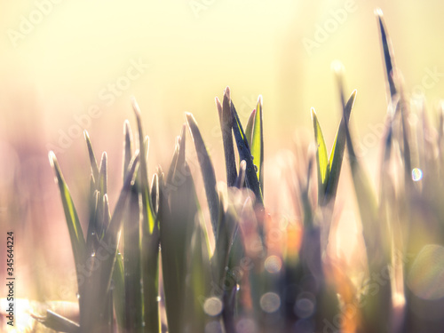Close-up Of Plants Against Blurred Background - fototapety na wymiar
