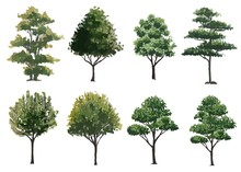 Collection Of  Watercolor Tree...