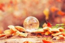 Crystal Ball On Autumn Leaves ...