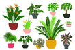 Indoor plants and flowers in pots. Landscaping at home. Decor for the apartment and garden. Cacti and succulents