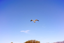 Low Angle View Of Seagull Flyi...